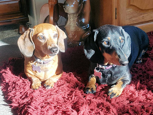 Syd and Daisy, mascots of Rosedale Cottages